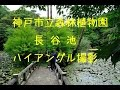 神戸市立森林植物園の長谷池でハイアングル撮影