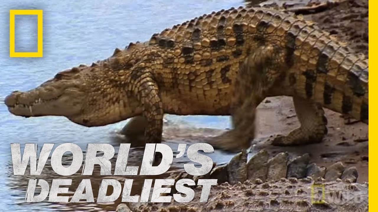 Croc attack worlds deadliest youtube freerunsca Image collections