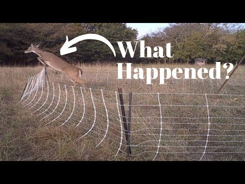 The Fence is Down! Electric Hog Net