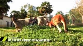 Est-il possible de sauter comme un kangourou ? - On n