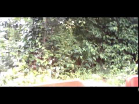 kalvin going to thorpe park