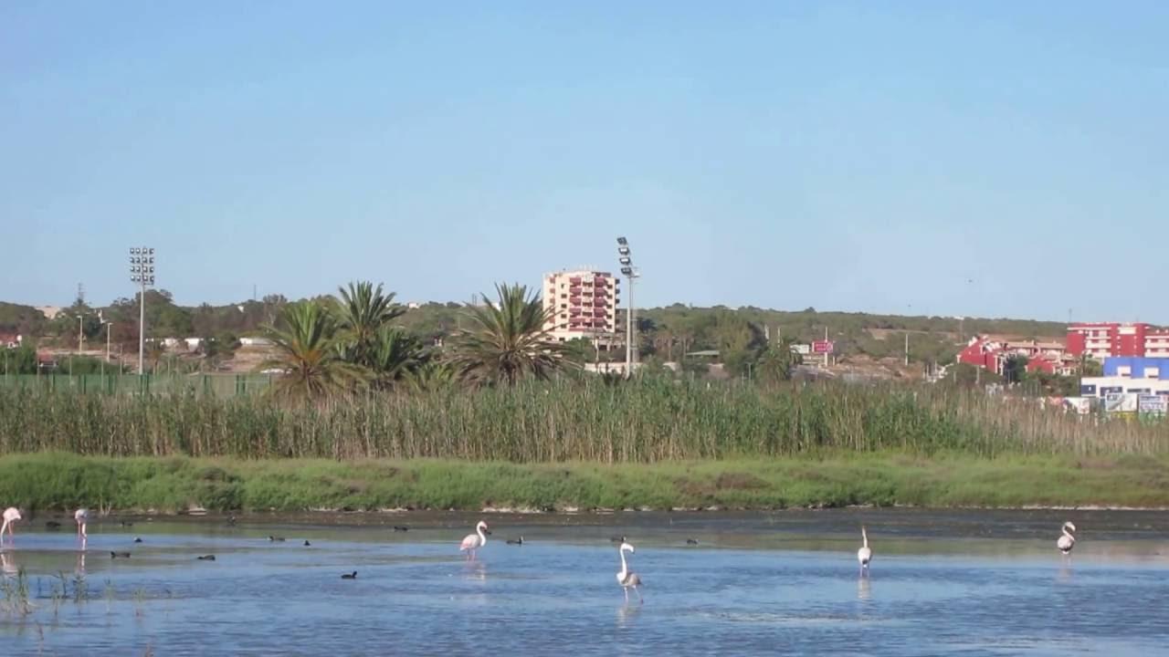 Flamingo In Huis : Flamingo s vlakbij ons huis youtube