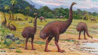 Moa olbrzymi - nowozelandzki, gigantyczny ptak wybity przez Maorysów