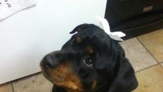 俺の愛犬貞子です! マジかわいいです! 名前はもちろん映画のリングか...