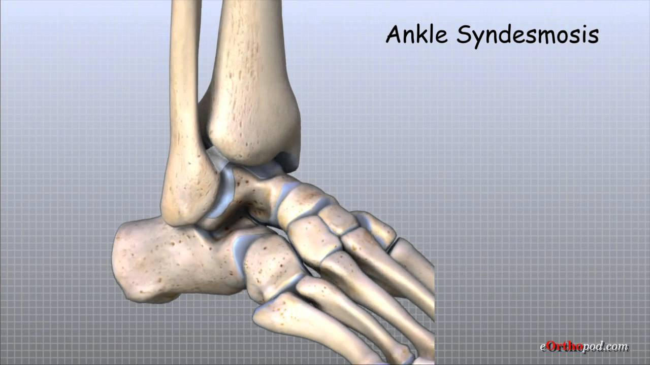 Ankle Anatomy Animated Tutorial Youtube