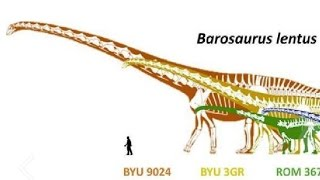 Paleontology News: Is Barosaurus Bigger Than Argentinosaurus?