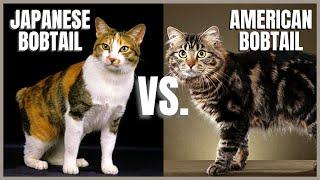 Japanese Bobtail Cat VS. American Bobtail Cat