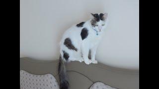 Akıllı kedi.Konuşan kedi.Sevimli kedi ŞANS.