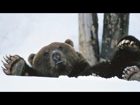 Глобальное потепление. Медведь проснулся