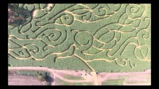 Bose Family Farm Corn Maze Albany, OR
