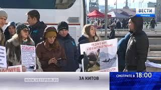Зоозащитники устролили пикет в защиту белух и косаток, которых держат в бухте Средняя