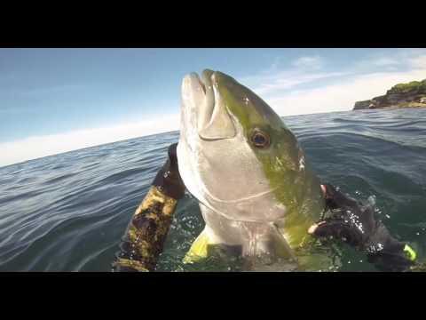 Spearfishing Sydney NSW Vol 3