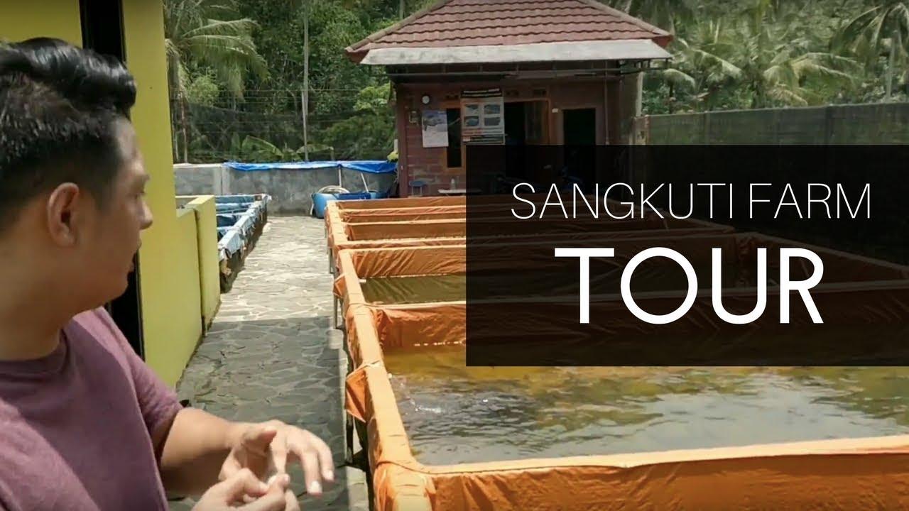 Download SANGKUTI FARM TOUR !!