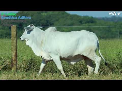 LOTE 19 - REM 10443 - 3º Leilão Genética Aditiva Expogenética 2020