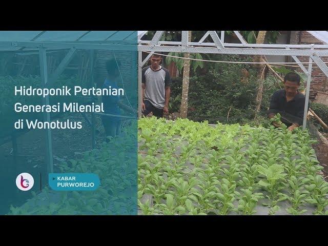 Hidroponik Pertanian Generasi Milenial di Wonotulus