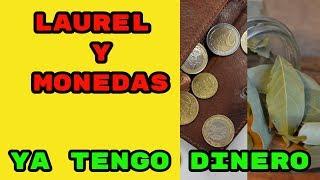 07 hechizo laurel y monedas para tener mucho dinero hoy mismo, fácil y rápido