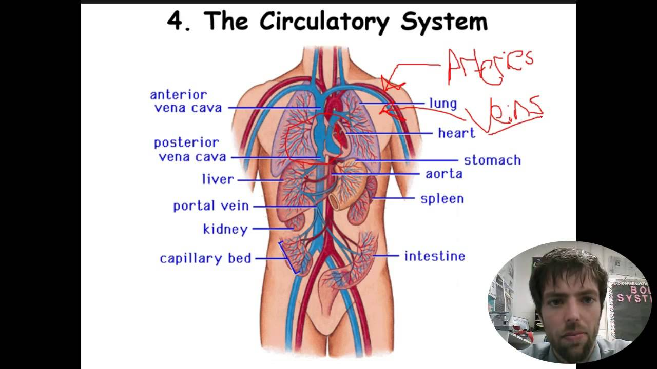 Body Systems Overview Notes Youtube
