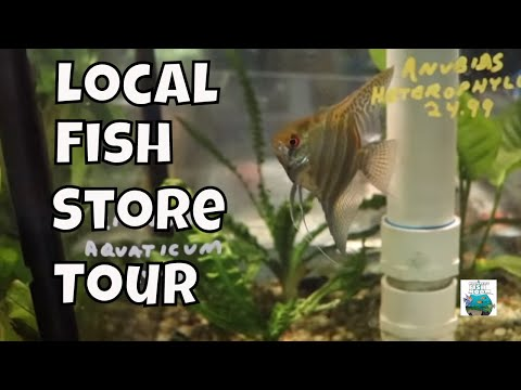 Local Fish Store Tour!