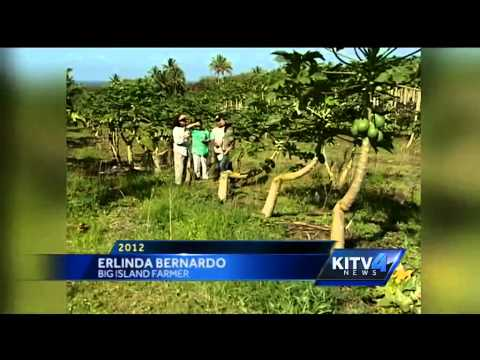 Papaya farmer suing Hawaii County over GMO law