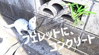 他勝手にお宅訪問。 ▻ ぐっぽい!みぃ君 - video → https://youtu.be/AA...