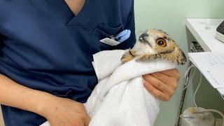 ガルー、動物病院にいく