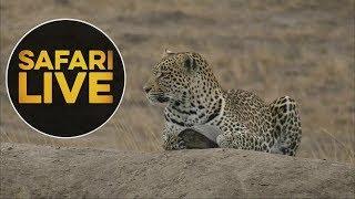 safariLIVE - Sunset Safari - July 18, 2018