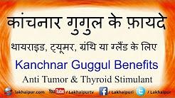 कांचनार गुगुल के फ़ायदे थायराइड, ट्यूमर के लिए | Kanchnar Gugul Benefits For Thyroid and Tumor