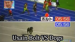 Usain Bolt vs Dogs - Who will win?