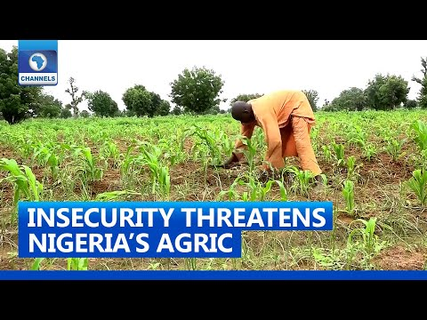 Famers Lament Impact Of Insecurity On Agriculture, Transportation | 31 July 2021