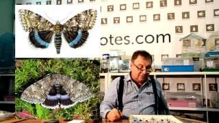 FFnotes - Сезон 1 Серия 2. О редких насекомых Башкирии