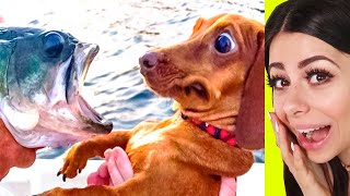 Funniest PET Compilation - Try Not To Laugh