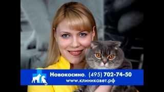 Ветеринарная клиника Новокосино(www.clinicavet.ru Новокосинская ветеринарная клиника открылась в сентябре 2010 года. Наша клиника круглосуточно..., 2014-12-17T19:31:53.000Z)