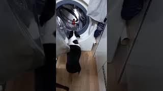 보스턴테리어 향숙이네 일상 :) 세탁기가 움직여서 무서…