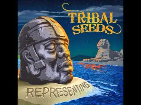 Night & Day -  Tribal Seeds