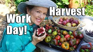 HUGE Urban Garden Workday | Harvest | Los Angeles