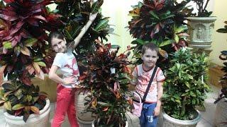 Ваш сад .Одесса .Цветы . Your garden .Odessa. Flowers(Гуляли по цветочному супермаркету
