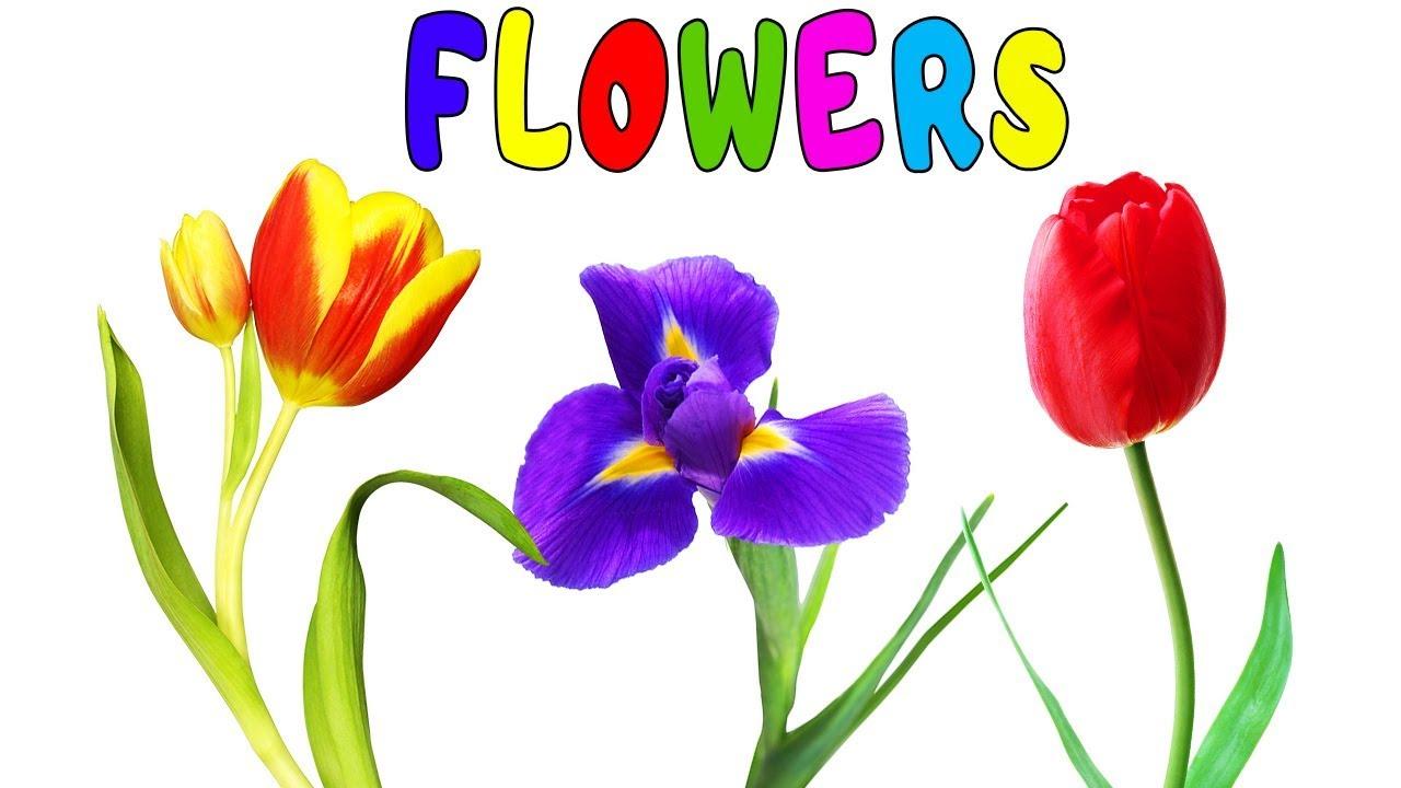 Дорога маме, картинки с названиями цветов на английском