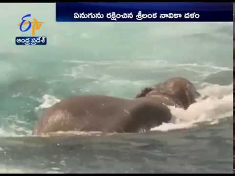 Elephant Washed Out to Sea | Rescued by Sri Lanka Navy
