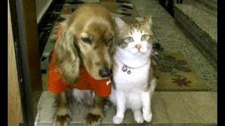 わん(リリー)がバシッとか猫(あーにゃん)を叩いてますねW 最初は何...