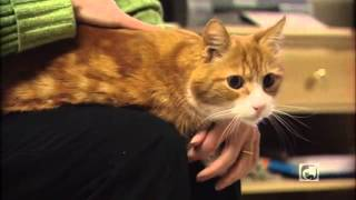 Caring for Your Diabetic Cat Part 6 - Recognizing and Treating Hypoglycemia