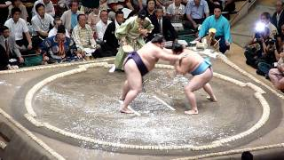 Sumo wrestling running scared pays off