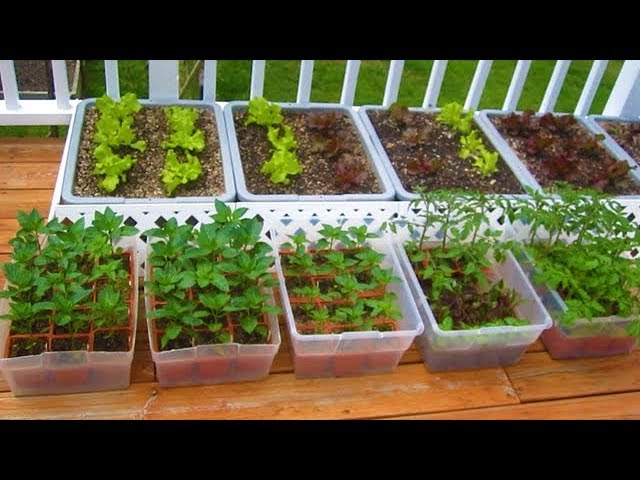 Grow Vegetables Plant Organic, How To Start Container Gardening
