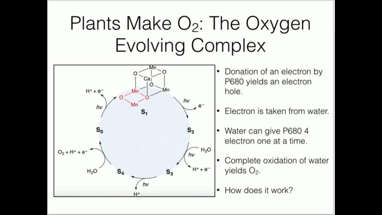 Water Splitting: The Oxygen-Evolving Complex
