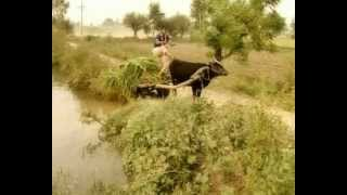 Fas Gayi Reda | Bhotu Shah Ji Zindabaad | Funny Video Song
