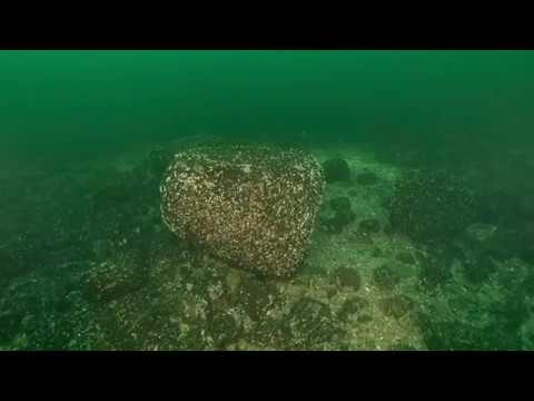 Scuba diving at a stony reef of a Słupsk Bank, southern Baltic Sea