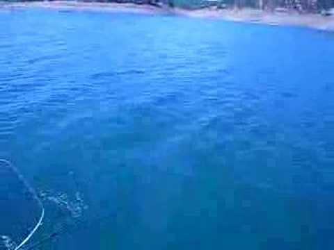Don pedro kokanee fishing from 6 1 08 youtube for Don pedro fishing report