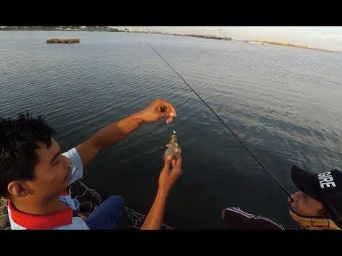 Rabbit Fish Fishing At The Morning Shine Using Banana