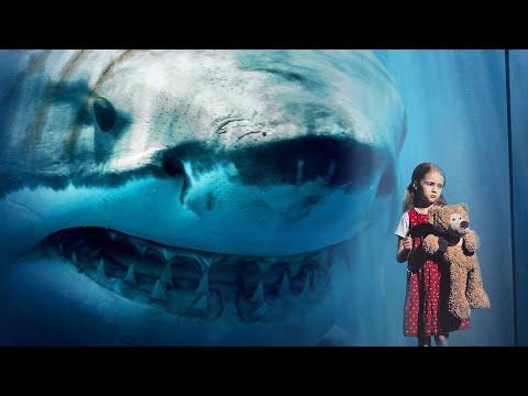 Вопрос: Сколько жила акула мегалодон?