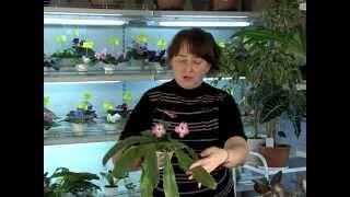 7_Размножение. Уход за комнатными растениями.Часть 7(Мы хотим познакомить вас с тем, как правильно выращивать комнатные растения. Ответить на возникающие у..., 2014-05-17T12:55:33.000Z)