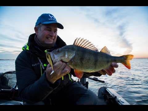 Ogromne Okonie, Sandacze i Szczupaki na Spinning - Westin Fishing